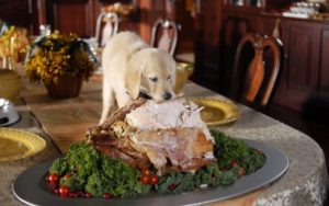 naughty_thanksgiving_puppy_wallpaper_2560x1600_wallpaperhere-600x375