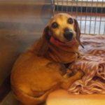Paw-Pals-Adopt-a-Senior-Pet-300x225