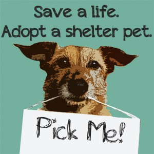 Paw-Pals-Shelter-Pet-300x300