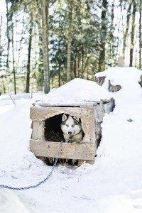 Dog-house-winter-Paw-Pals-200x300