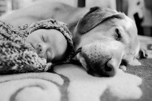 Dog-with-Newborn-Paw-Pals-300x200