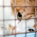 Paw-Pals-Adopt-a-Cat-600x390