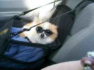 Paw-Pals-Dog-Safety