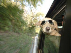 Paw-Pals-Dog-Vacation-600x450