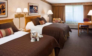 Paw-Pals-Dog-in-Hotel-Room