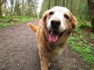 Paw-Pals-Dog-in-the-Woods-600x450