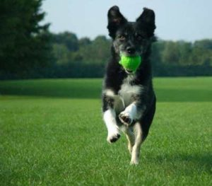 Paw-Pals-Healthy-Dog