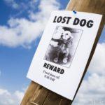 Paw-Pals-Lost-Pet-600x498