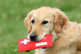 Paw-Pals-Pet-First-Aid