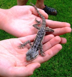 Paw-Pals-Reptile-for-Pet
