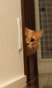 Paw-Pals-Scared-Cat