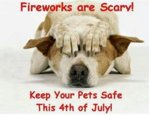 Paw-Pals-Scared-of-fireworks