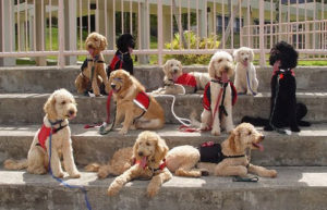 Paw-Pals-Service-Dogs
