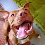Paw-Pals-Silly-Pit-Bull-600x536