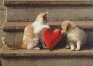 Paw-Pals-love-your-pets