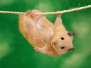 Responsibility-hamster-Paw-Pals-300x225
