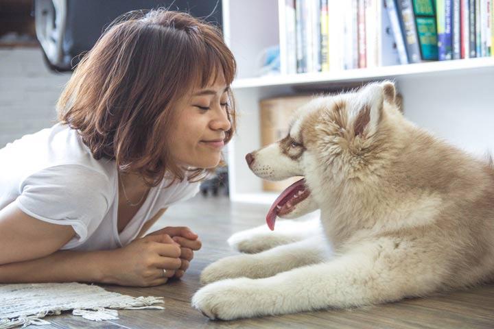 fairfax pet adoption