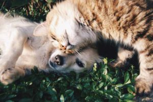 Affordable Pet Care Guide