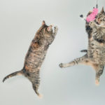 Cats Floating