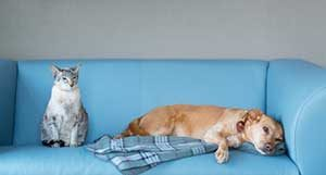 pets on furniture