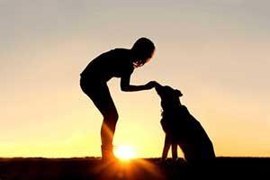 Best treats dog training