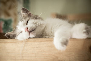 how to give a cat a pill relaxed