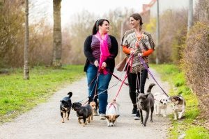 Fairfax, VA dog sitters who are walking multiple dogs on leashes to stop them from barking