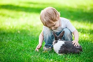 boy playing with a rabbit that his parents bought him and is being taught pet rabbit care by his parents