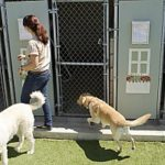 a boarding kennel that a couple dropped off their dogs at during their vacation in lieu of hiring a dog sitter