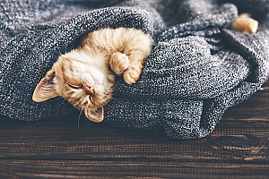 a small kitten wrapped up in a blanket that was provided by a cat sitting services company in Centreville, VA