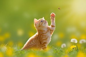 a kitten playing with a butterfly before visiting a few of the best pet boutiques in Northern Virginia with her owner