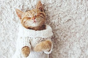 a kitten that is excited for her stay with overnight pet sitting services in Fairfax, VA