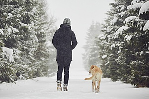 a dog walking in the snow with a dog walker since the owners are on vacation for the winter
