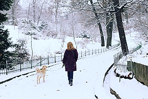 an employee of a professional dog walking services company out with a dog while there is snow on the ground