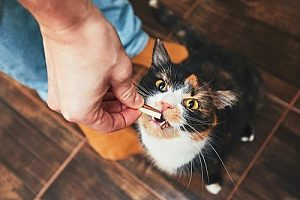 a cat receiving a treat after its owner learned how to trim cat claws