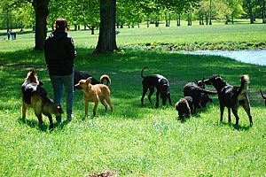 a doggy day care in Northern Virginia that is watching multiple dogs at once