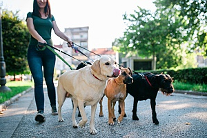 a woman walking dogs after learning how to become a pet sitter