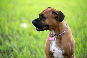 a dog that has a brand new dog training collar