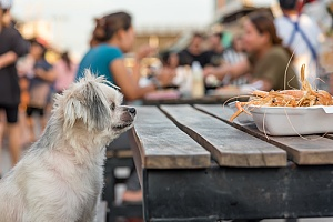 dog eating at a dog friendly restaurant