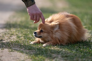 owner training their dog with one of the best dog treats to give your dog while walking