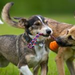 tug of war as a game to play with your dog at the park